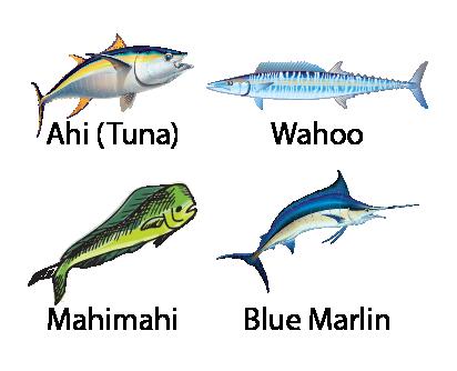 f4 fish355-01